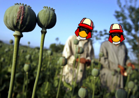growing opium.png